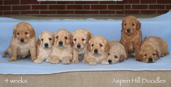 Gracie's Litter